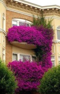 grandes ventanales con flores malvas