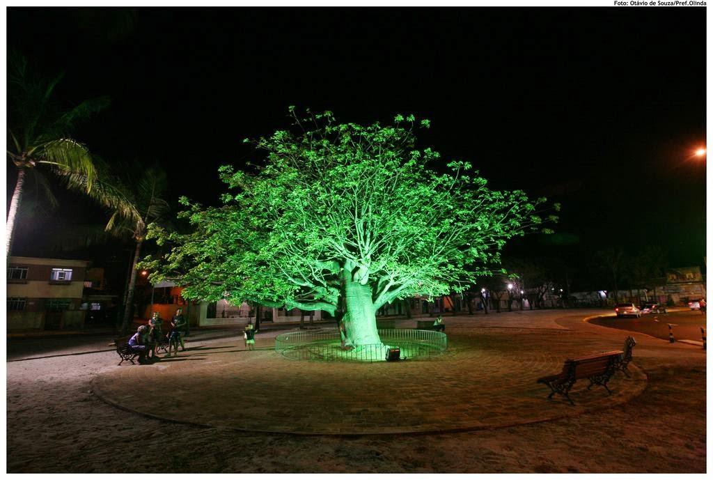 Baobá do Fortim, Olinda, PE