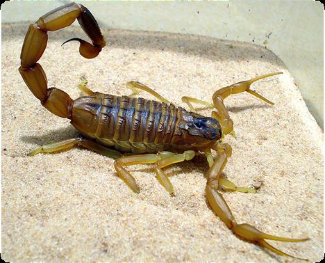 Death Stalking Scorpions
