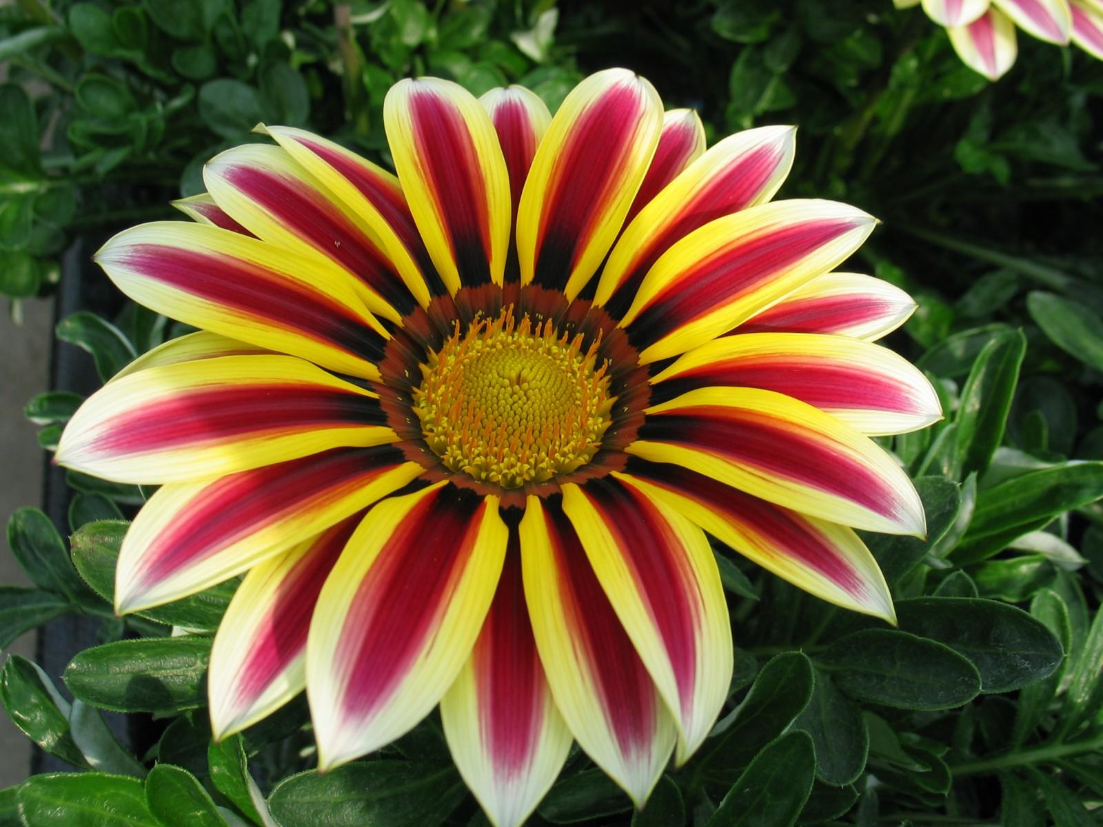 Crea tu jard n flores que crecen r pido en nuestro jard n - Flores que aguantan el sol ...