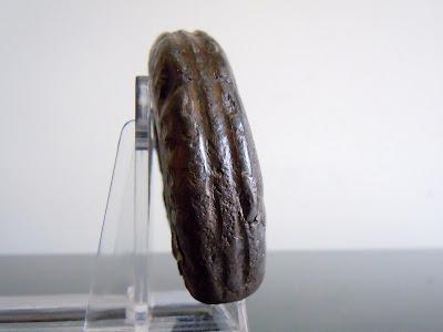 Fossil Ammonite: Hildoceras lusitanicum.