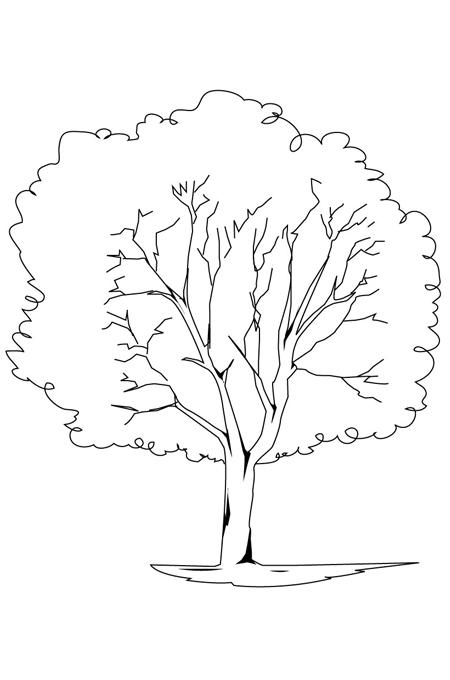 رسم شجرة كبيرة للتلوين وتعليم الأطفال