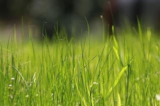 NATURAL TEXTURES grass.jpg