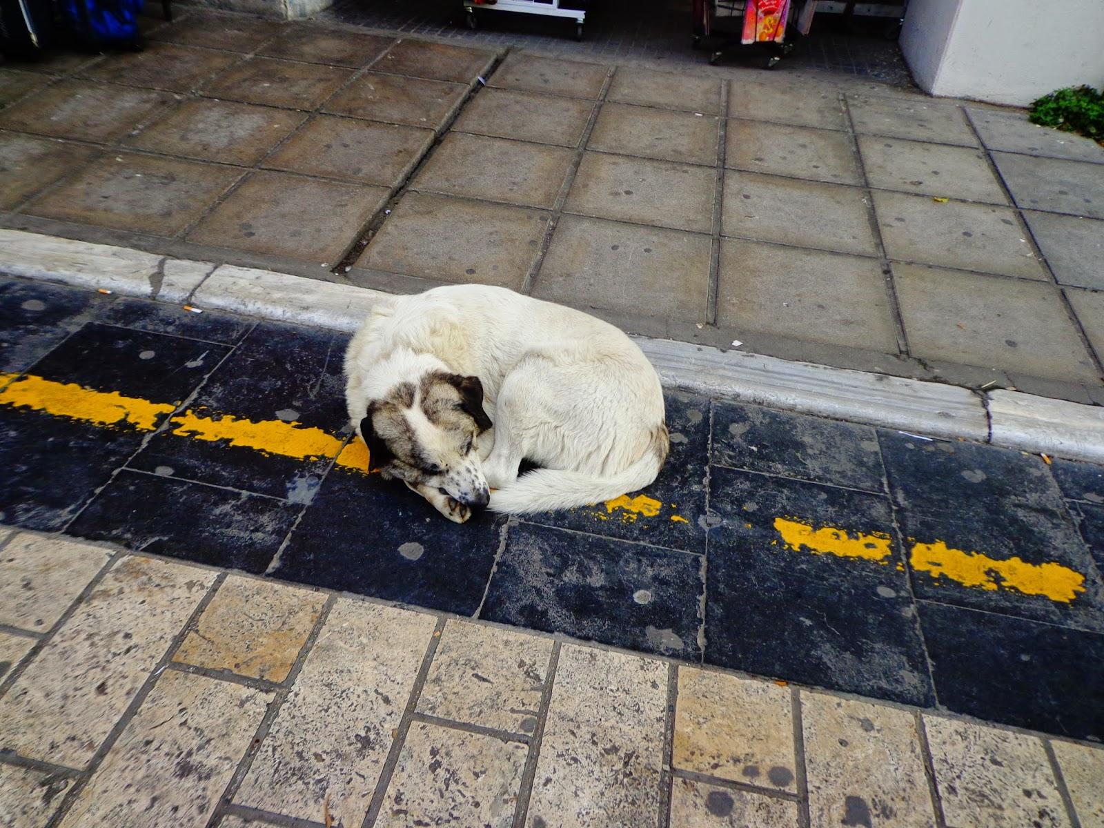 Собака-в-Салониках-2