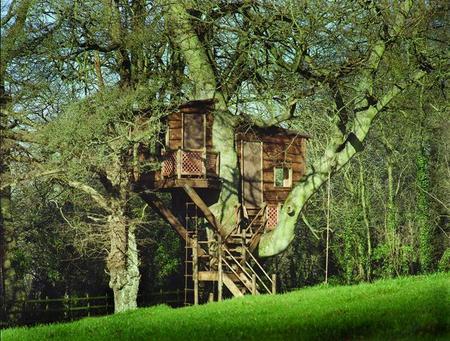 Falling off bridges if i had a million dollars - Tree house plans for adults ...