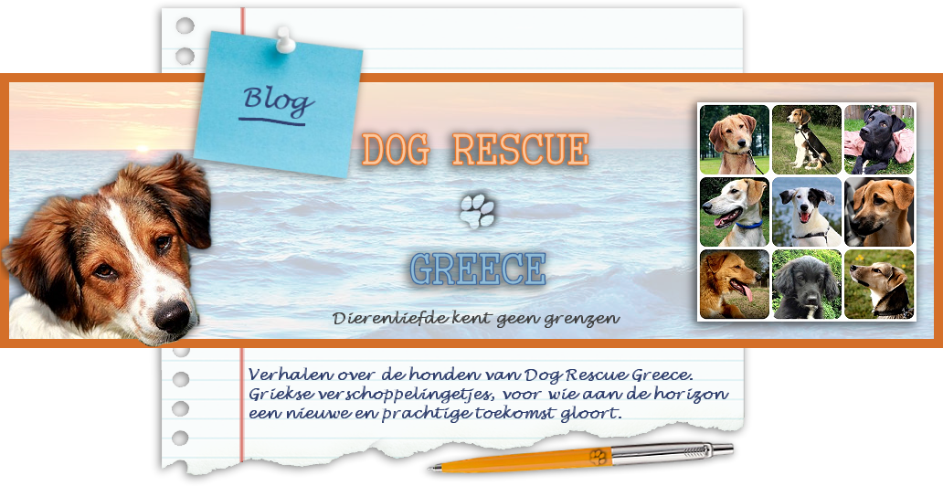 De honden van Dog Rescue Greece
