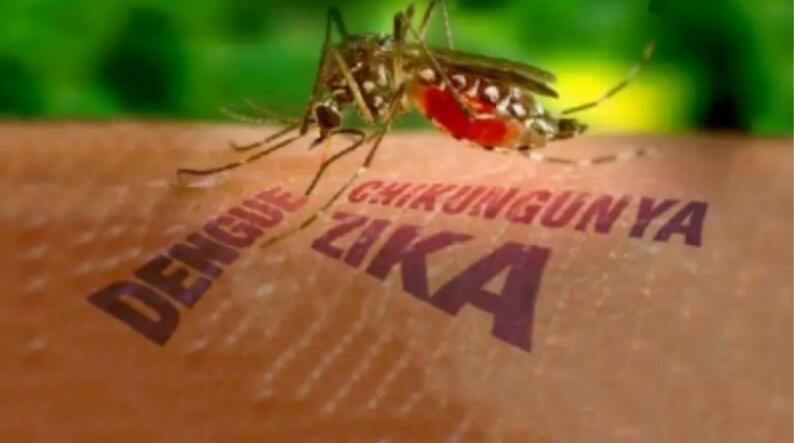 Awas! Virus Zika Dan Ancamannya