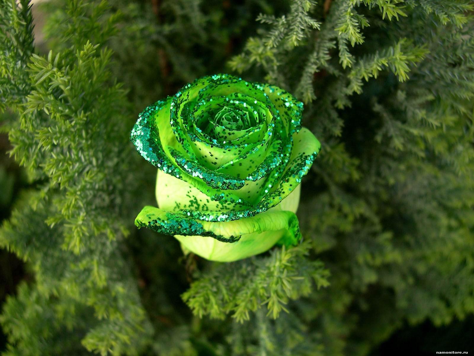 Зелені троянди є символом достатку