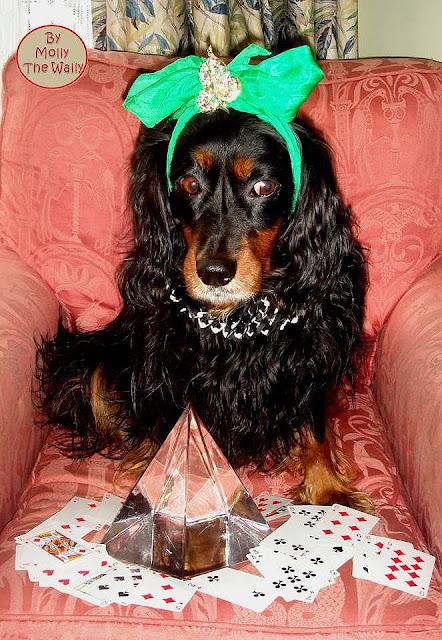 Molly The Wally Does Mystic Molly!