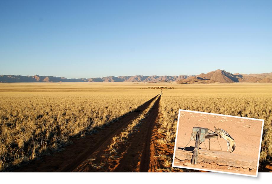 Ynas Reise Blog | Gunsbewys - eine Farm in Namibia