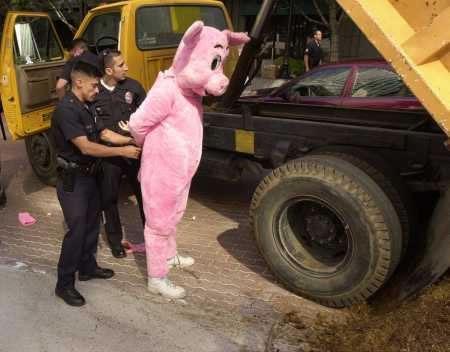 policiais-prendendo-porco-police-arresting-pig