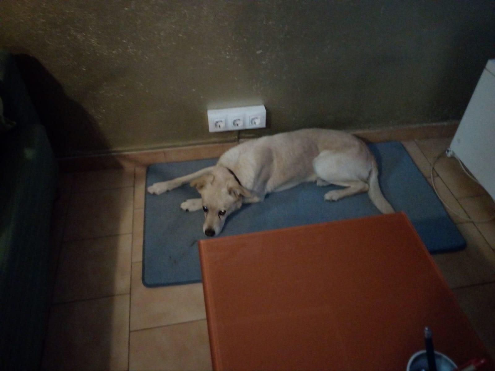y este es Angus...toda una angustia de lealtad y obediencia