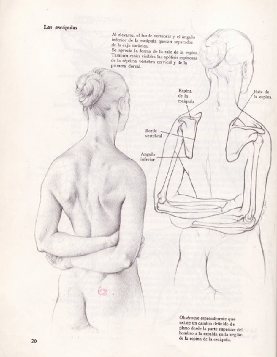 Human Figure Drawing Methods: Female Anatomy Back View Drawing
