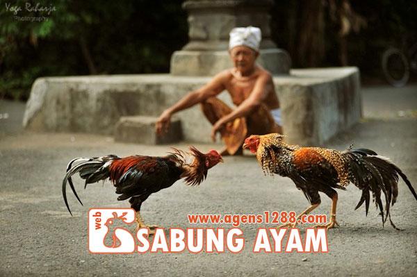 Hasil Pertandingan Arena AB6 Sabung Ayam S1228.net 14 November 2015