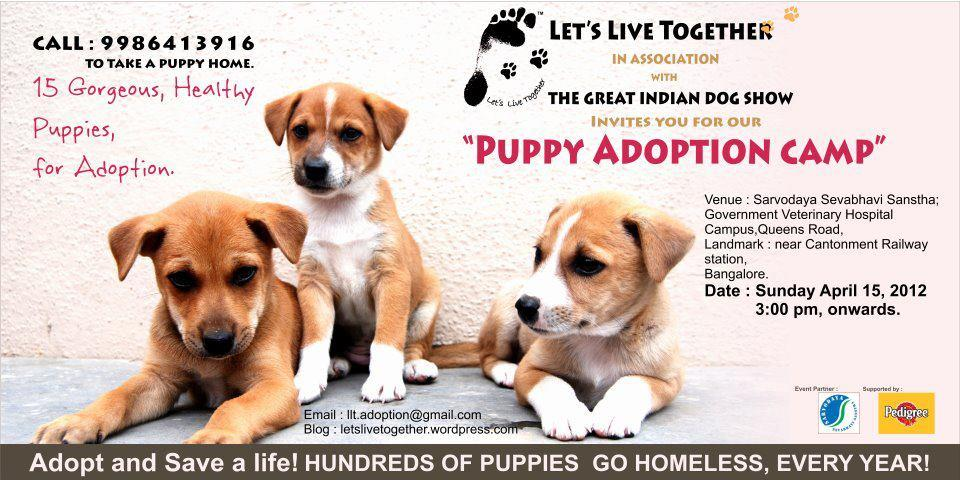 preeti shenoy s blog on dogs pure love on four legs