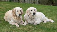 My loveable dogs
