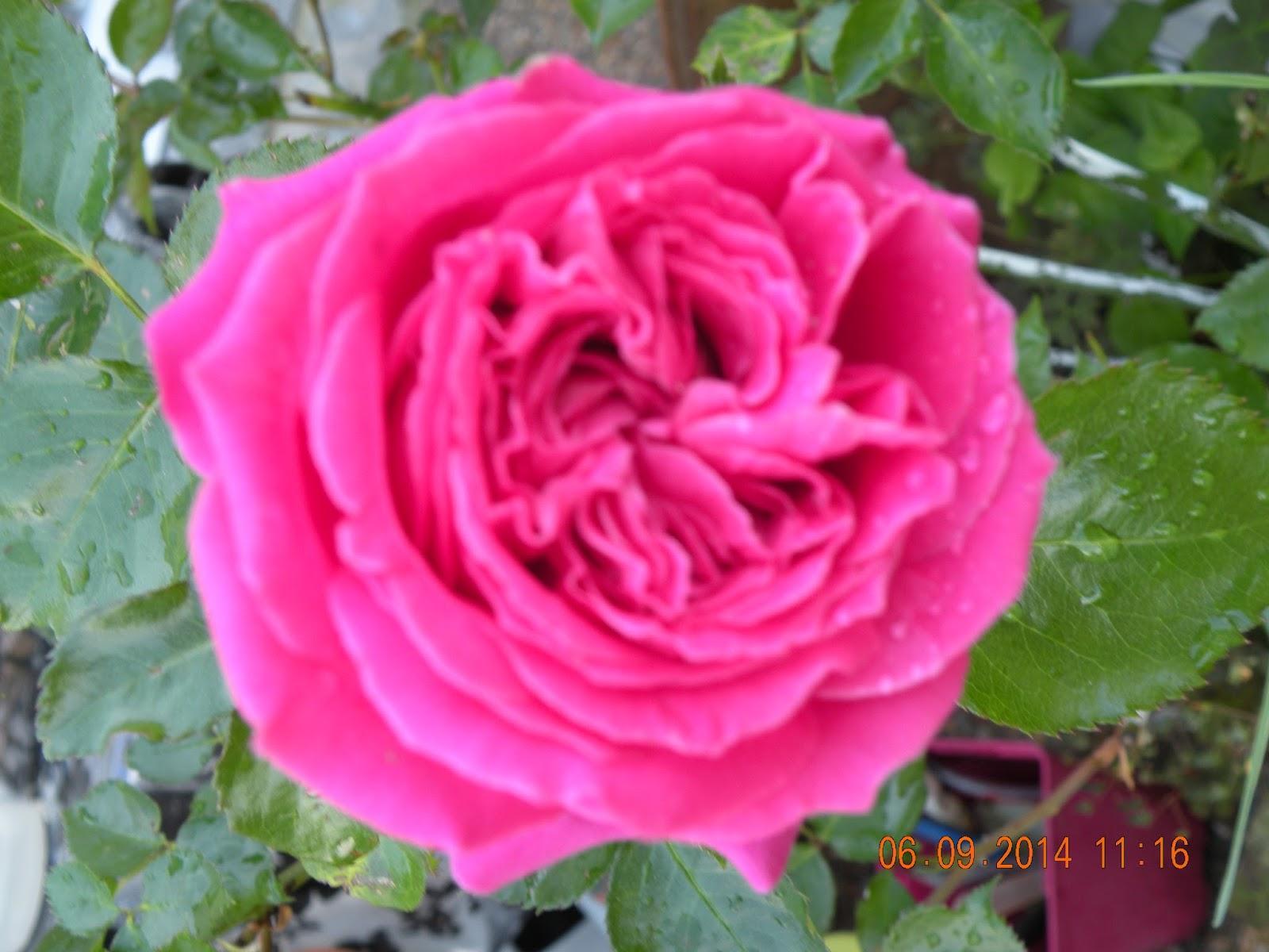 Fleurs et jardin de katy rosier bernadette lafond for Fleurs et jardins