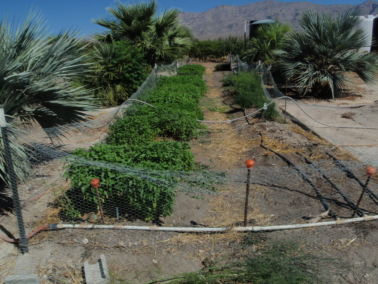 Xtremehorticulture Of The Desert 09 August 2015