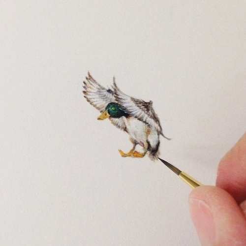 14-Mallard-Duck-Karen-Libecap-Star-Wars-&-other-Miniature-Paintings-and-drawings-www-designstack-co