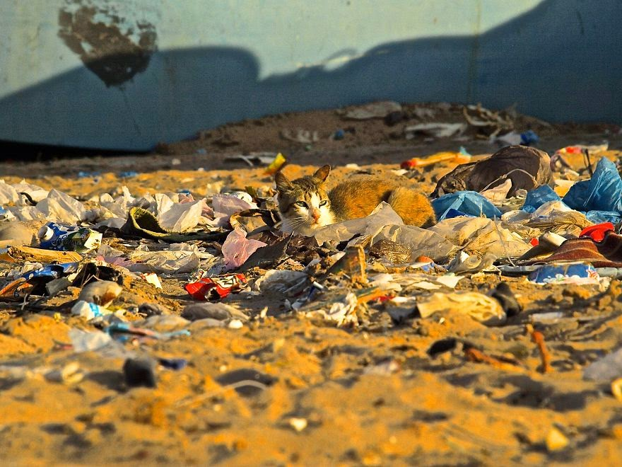 You Will Want To Recycle Everything After Seeing These Photos! - Cat Sunning In Trash (Wetsahara, Morocco)