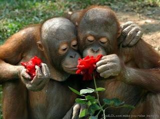 Foto-foto Hewan Penuh Cinta