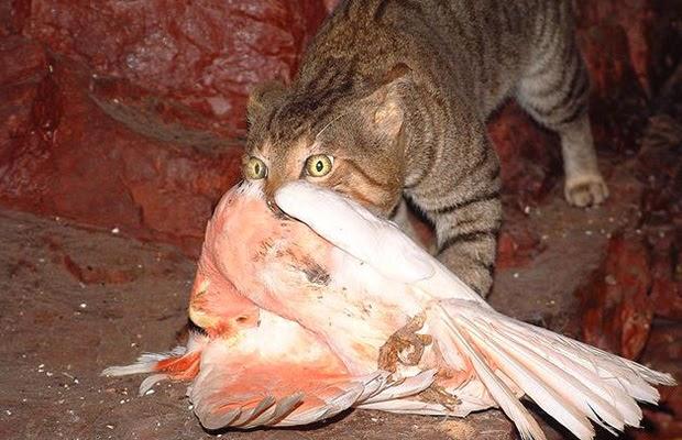 Ferel Cat Food Web