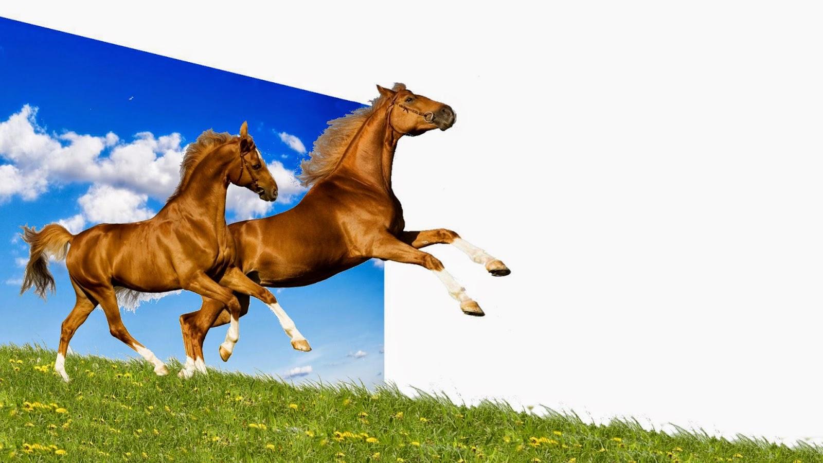 cavalos-correndo para novo prado-1920x1080