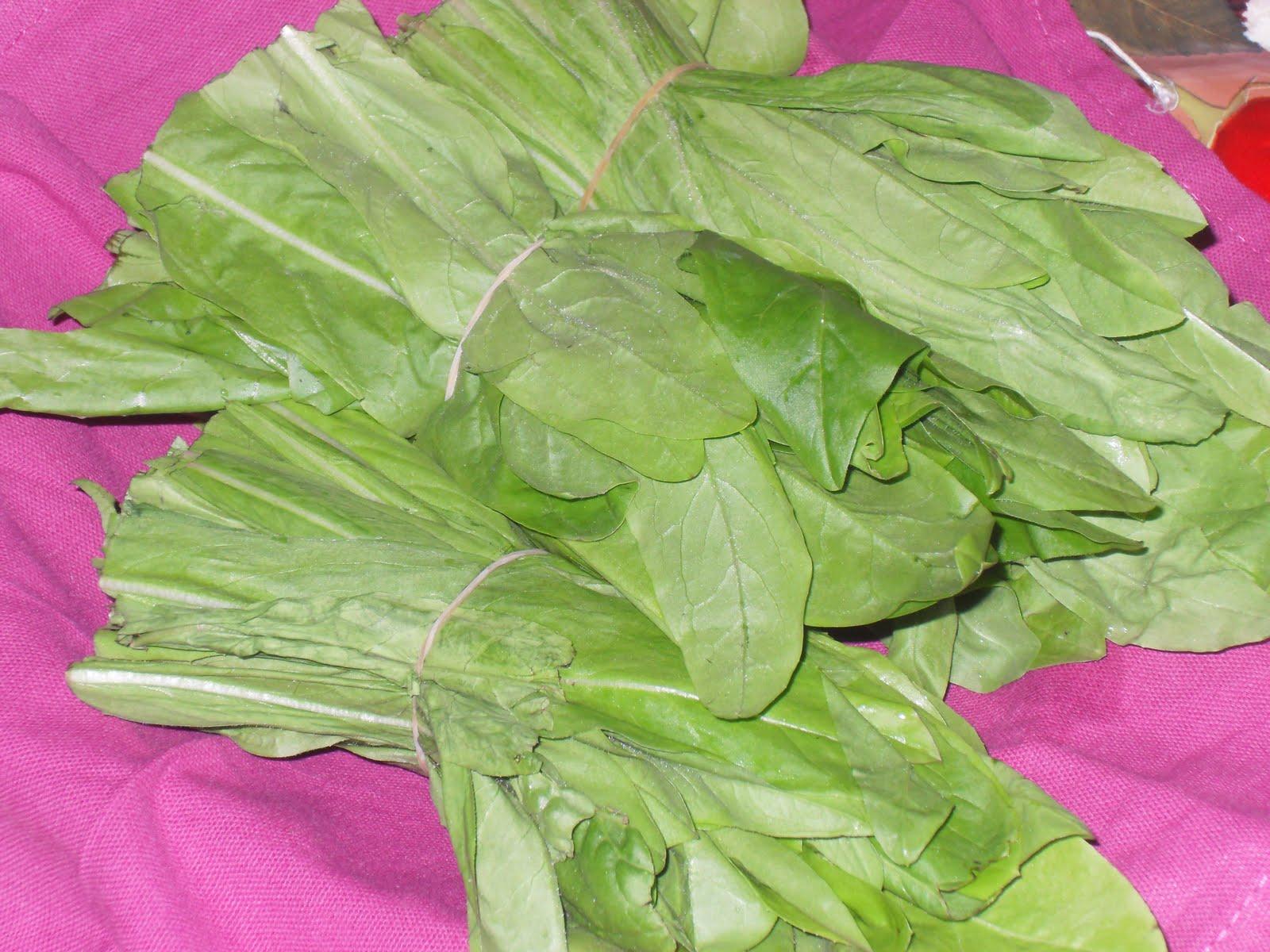Sogni golosi di una piccola cucina naturale l 39 insalata for Insalata da taglio