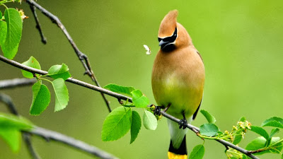 Nice-Bird-Pictures
