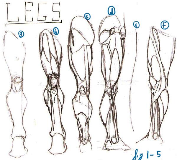 David finch dynamic figure drawing download