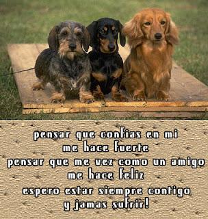 Perros y mensaje de amistad