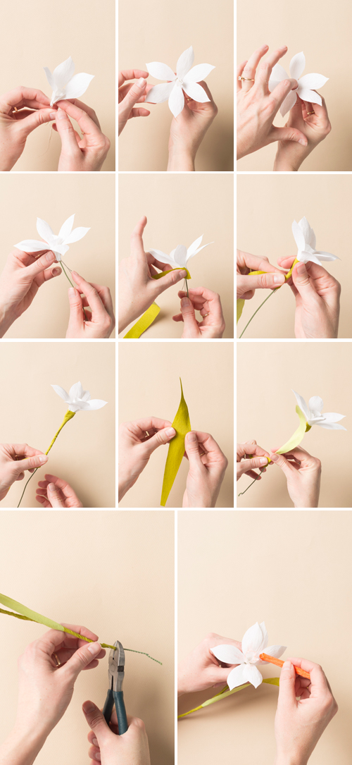 paper flower narcissus