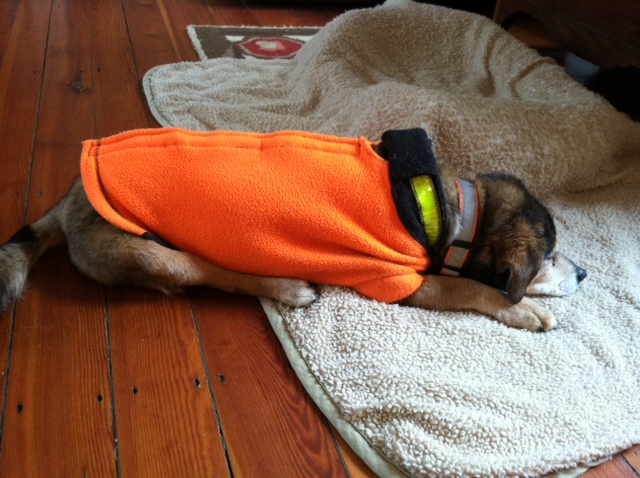 Diary of a real life veterinarian my dogs waistline for Dog bed beside bed