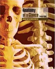 at a glance anatomy