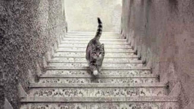gato bajando una escalera fotografia en picado