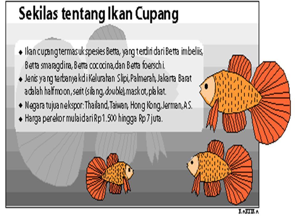 cara memelihara ikan cupang untuk pemeliharaan ikan cupang sebetulnya ...