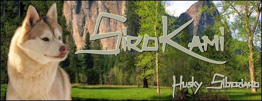 Foto Imagen Criadero Husky Siberiano Zamora Sirokami