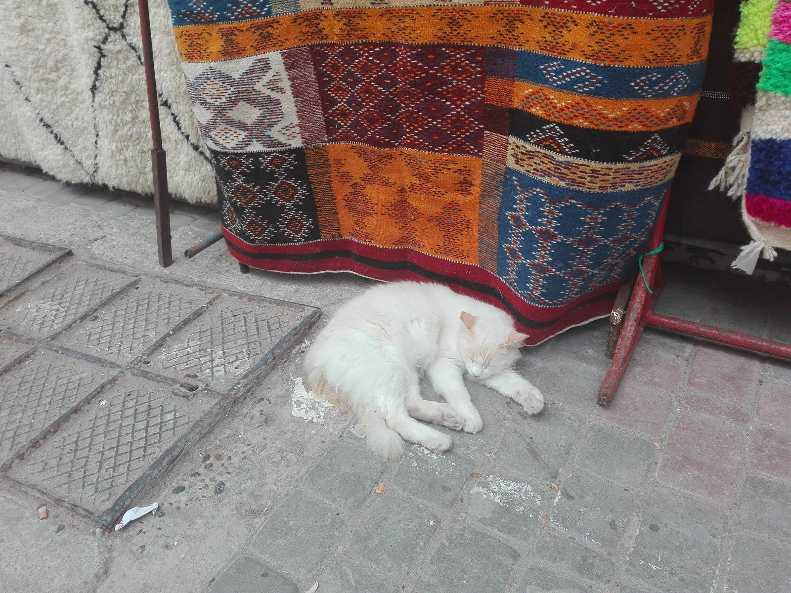Koty Maroka