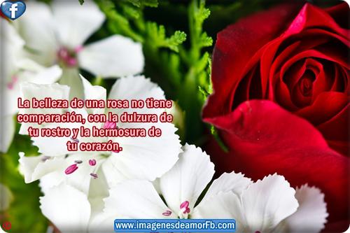 Imágenes flores de rosas bonitas con frases para compartir