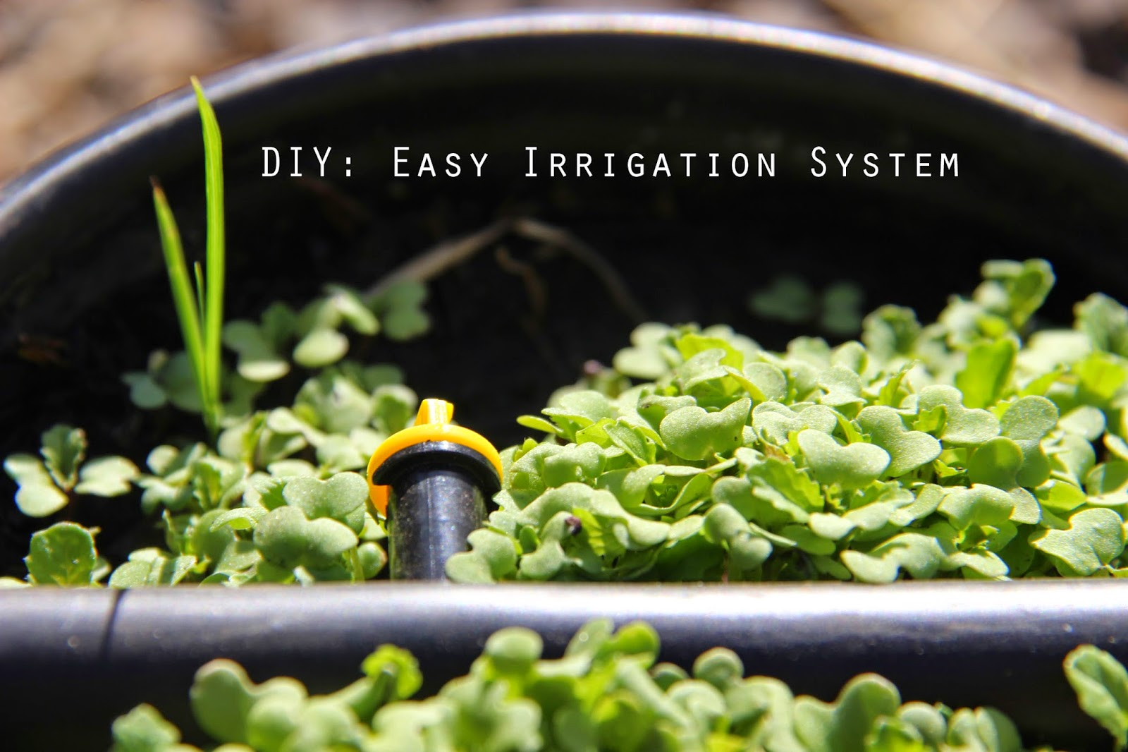 My first garden diy easy and inexpensively a drip irrigation system - Diy drip irrigation systems ...