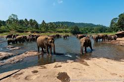 Sri Lanca
