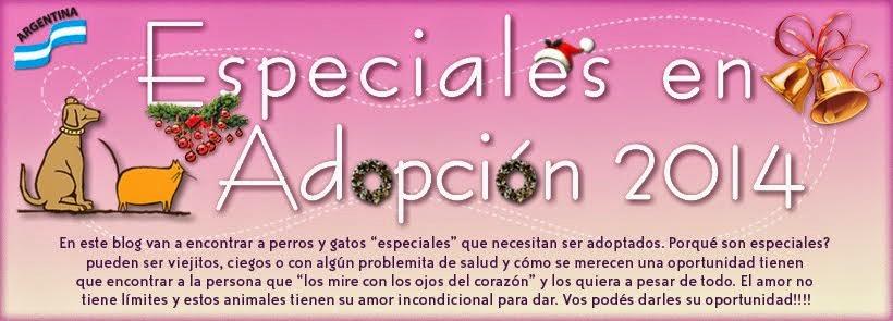 Conoceme y adoptame 2014!!
