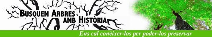 A la Garrotxa, Busquem arbres amb història