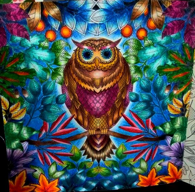 fotos jardim secreto:Johanna Basford Coloring Book Owl Enchanted Forest