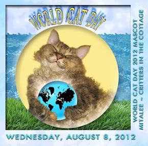 World Cat Day 8th August 2012
