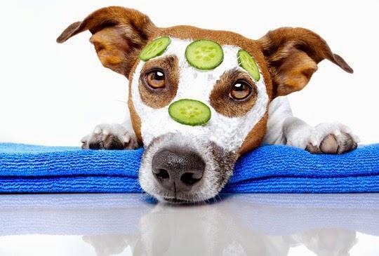 remedios caseros para perros con picazon en piel