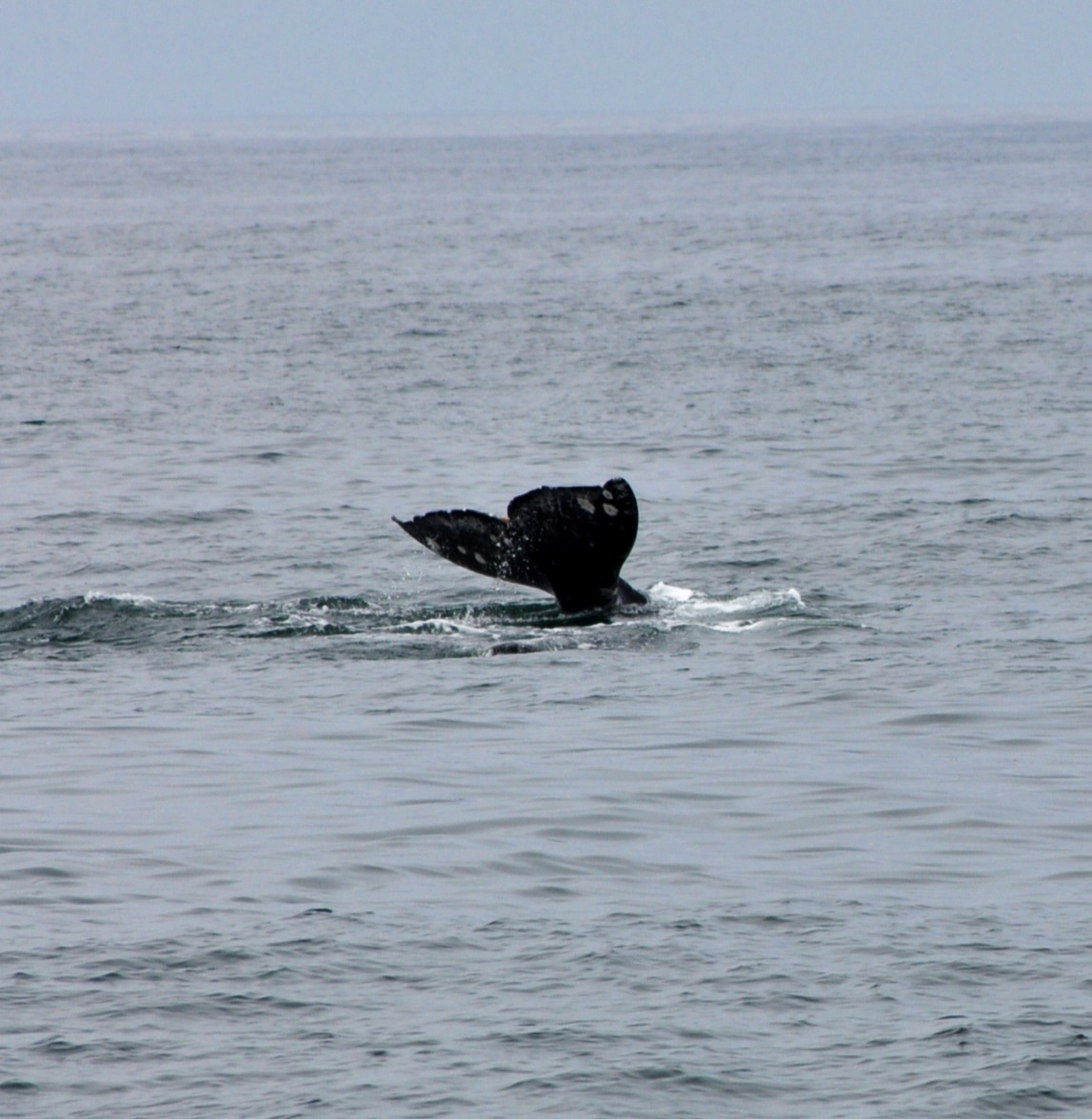 SoCal Kids Outdoor Adventures: Whale Watching w/ Harbor ...