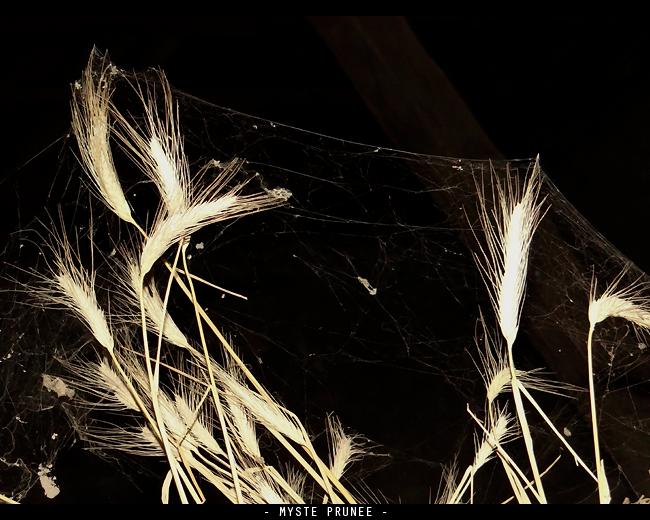 Gallerie Photo [Myste Prunee] DSC00784