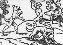 account of the sighting of the morbach werewolf Do these mythical creatures really lurk in the darkest corners of america click here to read a more detailed account of the bray road werewolf sightings.