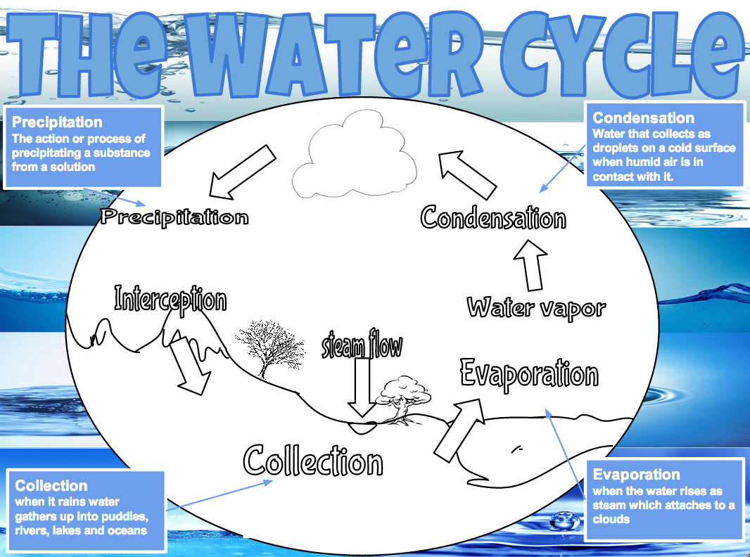 My Water Cycle Poster